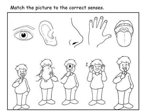 5 senses worksheets free 5 senses worksheet for crafts and worksheets