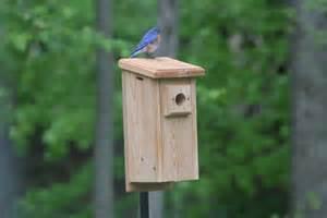 blue bird houses with vacancies unique birdhouse boutique