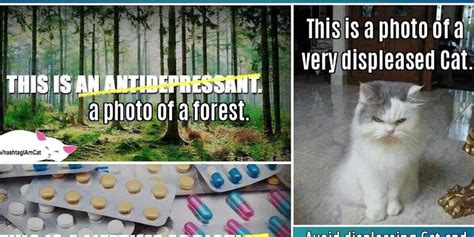 Antidepressant Meme - cat account defaces popular meme to make point about