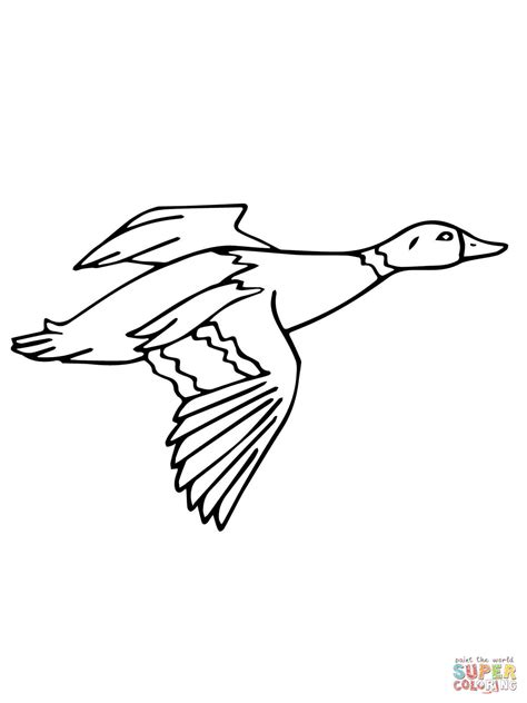 coloring page mallard duck flying mallard drake coloring page free printable