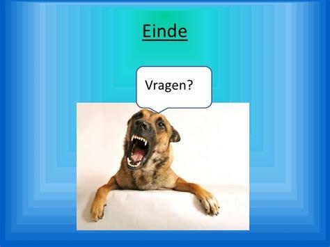 Organzie by Herplaatsen Van Agressieve Honden