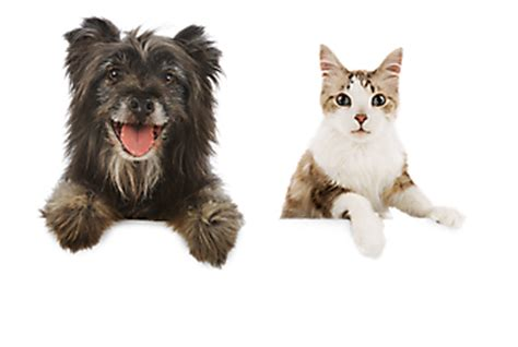Cutest Cats Pet Pet Pet Product 7 by Pet Supplies Accessories And Products Petsmart