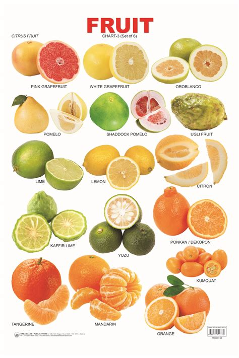 fruit vs vegetable list citrus fruit chart cooking and baking