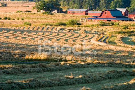 farm and hay field stock photos freeimages