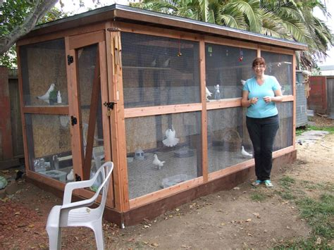 Raise Chicken In Backyard How To Create An Aviary For Rescued Pigeons Or Doves