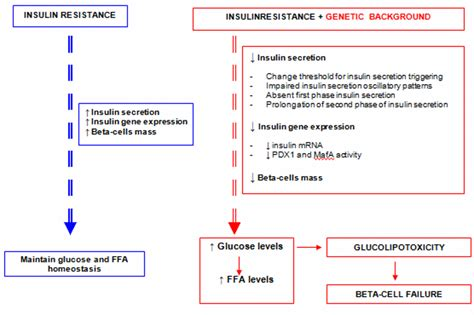 real results for with type 2 diabetes books beta cell function and failure in type 2 diabetes intechopen