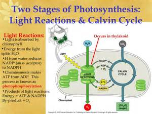 light reaction equation ap biology ch 8 photosynthesis light reactions