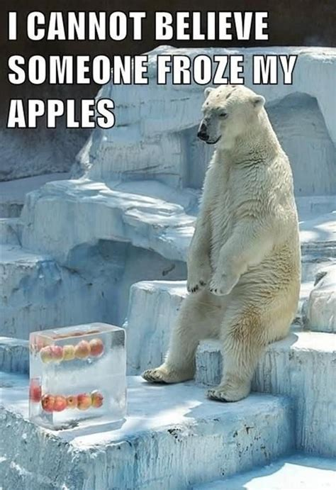Most Hilarious Animals by 20 Most Funniest Animal Meme Pictures And Images