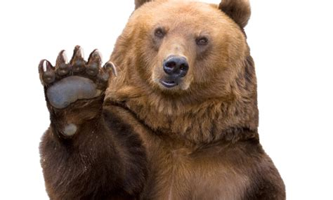 fotos graciosas de animales con frase curio sida des 10 osados gifs de osos haciendo cosas graciosas vix