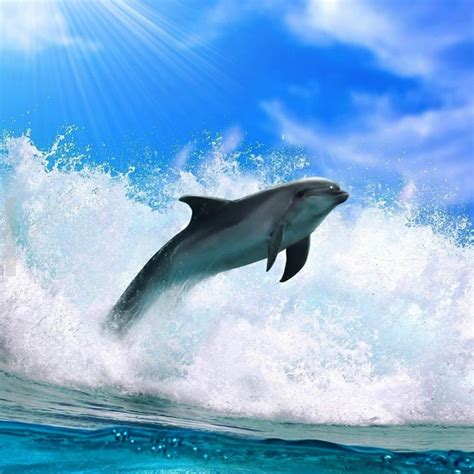 dolphin apk dolphin live wallpaper apk mirror free