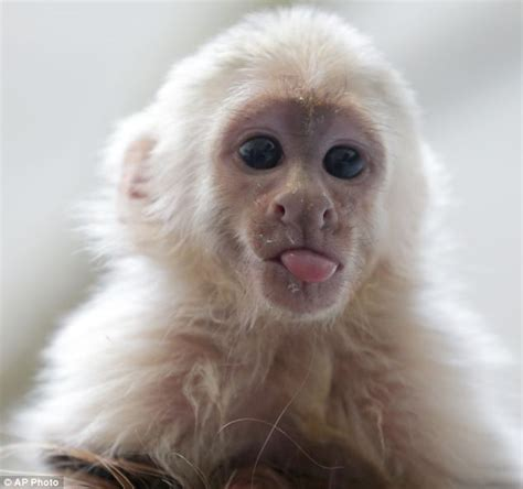 justin bieber gives away his lonely pet monkey instead