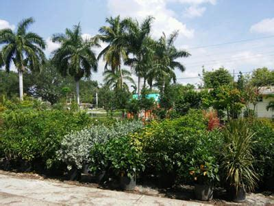 Landscape Supply Fort Myers Fort Myers Plant Nursery Palm Trees Fruit Trees