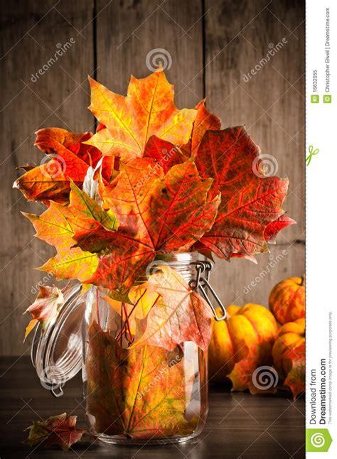 autumn leaves  life royalty  stock photo image
