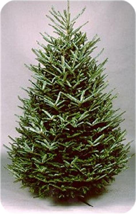 best 25 fresh christmas trees ideas on pinterest spruce
