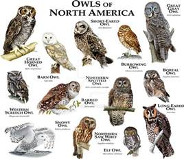 owls of north america by rogerdhall on deviantart