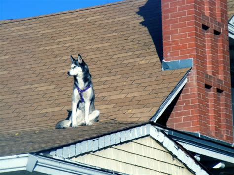 Dog On A Roof | random shots dog on a cold slate roof dre s ramblings