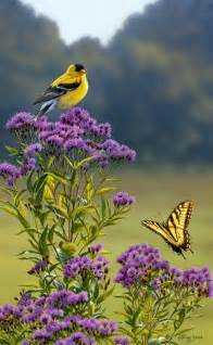 goldfinch on ironweed birds wildlife art and yellow