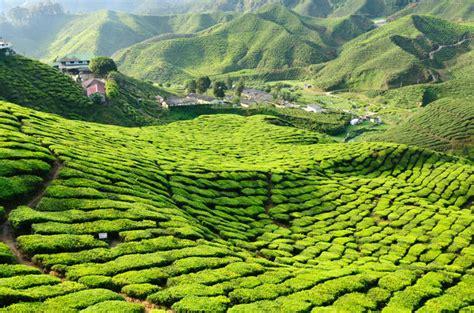 green wallpaper malaysia 3 night cameron highlands and penang tour from kuala