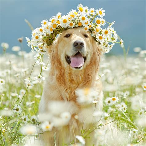 puppies and flowers golden retriever names unique ideas flower children flower crowns