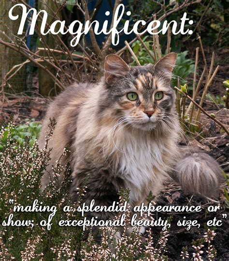 define magnificent pin cats playful kitty cat looking facebook timeline cover