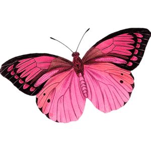 i like this butterfly too i love the black edging of the