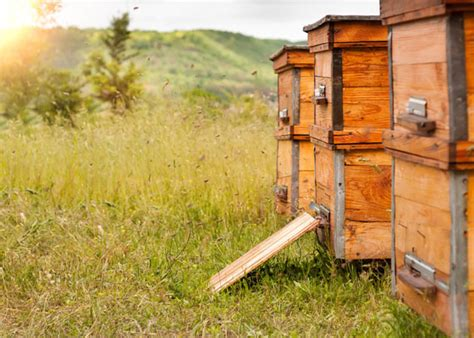 start a beehive in your backyard 9 tips for starting a backyard beehive garden club