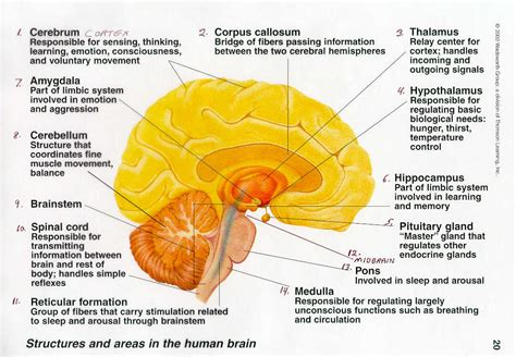 different sections of the brain neurology whirl