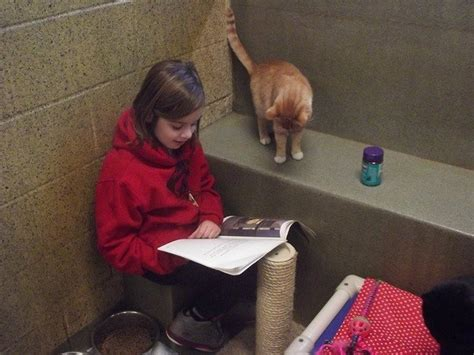 shelter implements book buddies program  children   read  adoptable cats