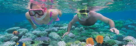 glass bottom boat tours gold coast palm cove tours
