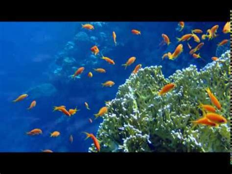 into the blue underwater sounds of nature for relaxation the best relaxing nature sounds 1 hour mountain creek