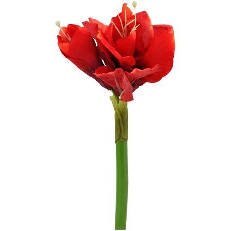 amaryllis fiore amaryllis
