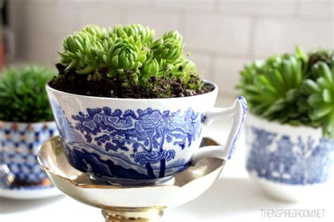 tiny potted plants teacup gardens 5 minute miniature container garden the