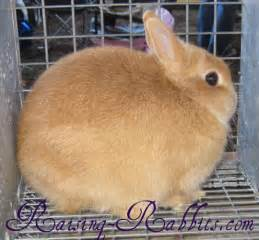rabbit colors rabbit coat color genetics the genes rabbit colors