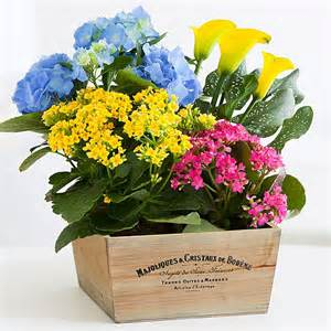 Potted Flowers Send Potted Garden Plants And Flowers Proflowers