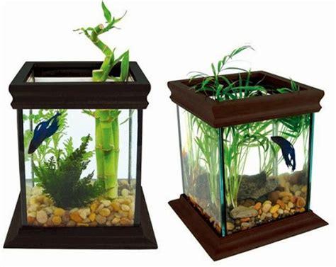 mudah  sederhana  dekorasi aquarium dunia