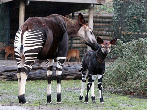Japaner Zoologischer Garten by Berlin Zoo Animal For All The Family