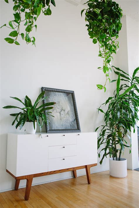 indoor plant design sneak peek best of indoor plants design sponge