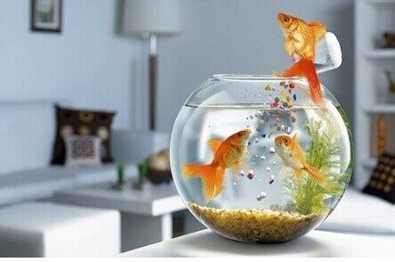 china  glass fish bowlacrylic fish tank acrylic