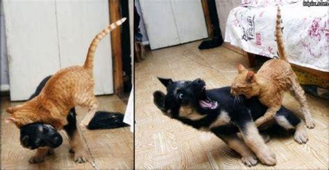 cat vs fight cat vs fight pictures 217 pic 3