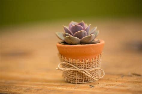 Mini 3 Juta 29 melhores imagens de lembrancinhas no suculentas casamento e plantas