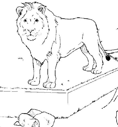 imagenes de leones para colorear feldman blog dibujos de leones