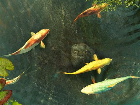free download wallpaper 3d bergerak for pc koi fish 3d screensaver free download and software