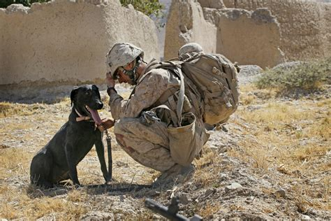 war dogs take two 174 canine veterans honored in new war dogs book