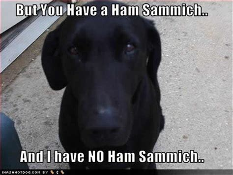 Sad Animal Memes - sad dog funny pictures dump a day