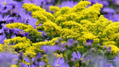 Blumen Stauden Halbschatten by Herbststauden Pflanzen Und Pflegen Ndr De Ratgeber