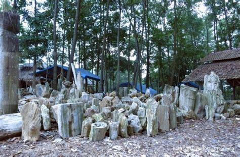Meja Fosil Kayu menggali potensi kerajinan fosil kayu di lebak 1