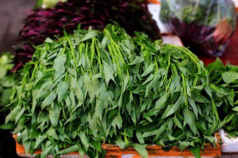 vegetables greens vegetables leafy greens china sichuan food