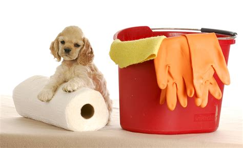 what to do after your has puppies 5 tips on cleaning up pet accidents dr marty becker
