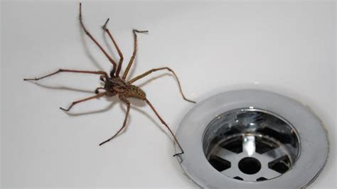 10 things you need to do to never see another spider in