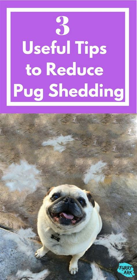 how to stop my pug from shedding 25 best ideas about shedding on cat shedding pet meds and itchy
